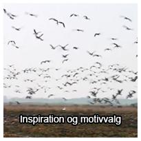Tema om inspiration og motivvalg
